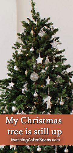 My Christmas Tree Is Still Up