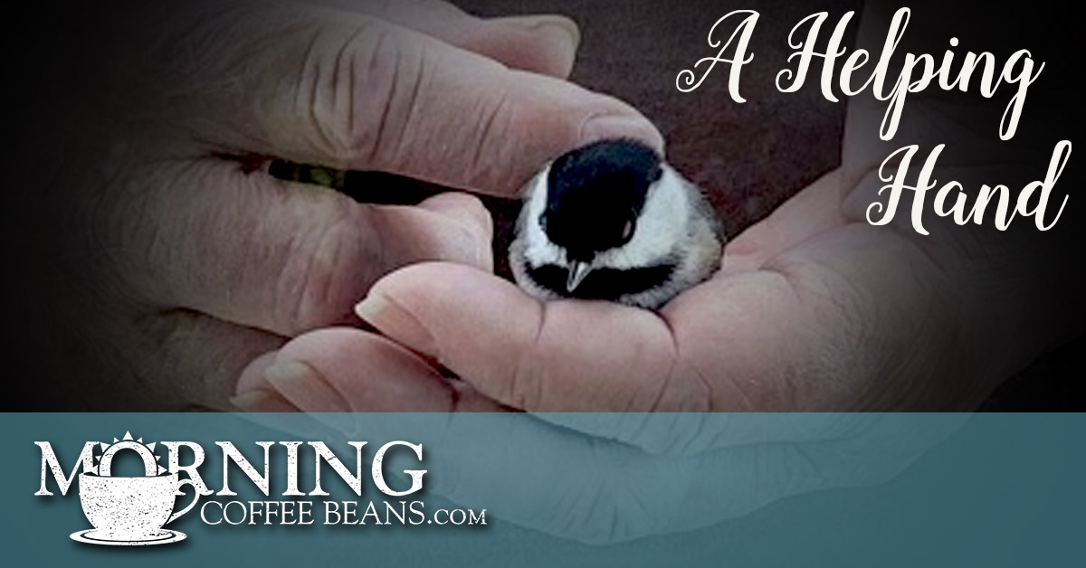 One day I was coming out my front door and looked down on the walkway in front of me to see a little Sparrow lying on the pavement, flapping its wings trying to get up. I looked around to see if any other birds might be a part of this little creature's life. I saw nothing and leaned down to...